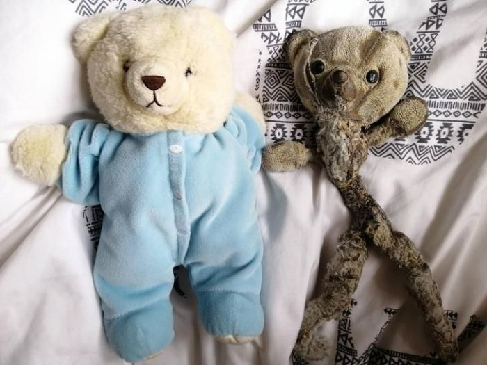 New and old teddy bears side by side